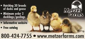 Ducks & Geese for Sale Online