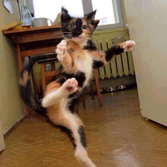 karate cat Facebook viral video