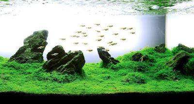 Gambar Aquascape Iwagumi Ikanesia