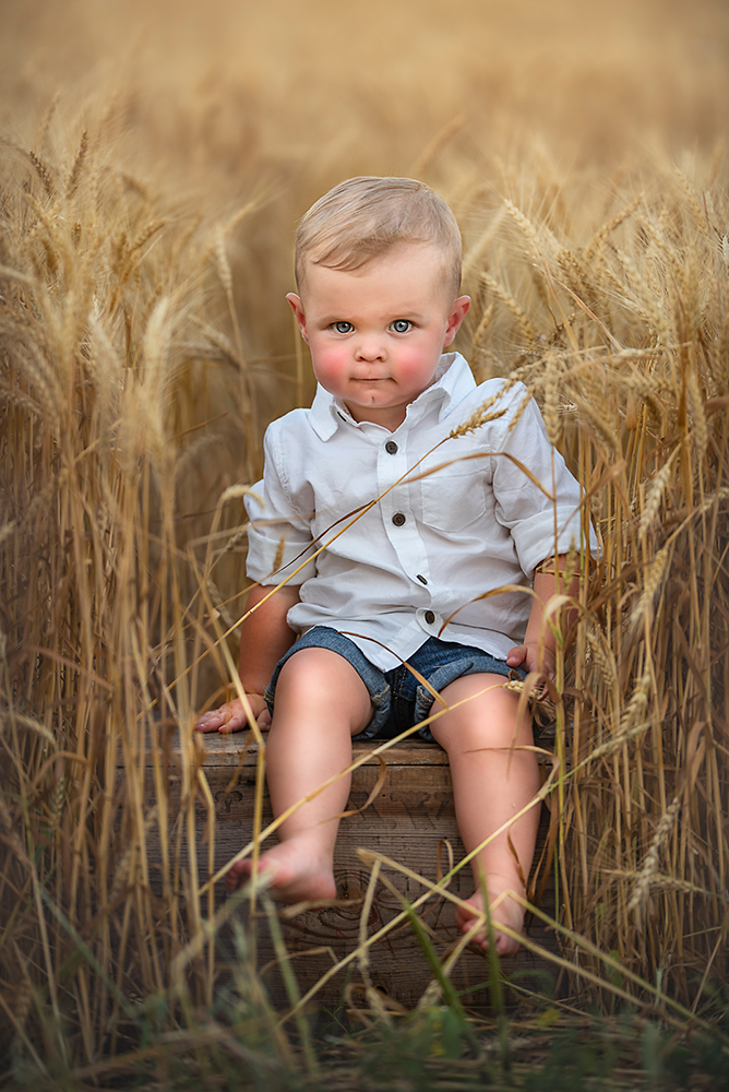 toddler in wheat field one year old boy outdoor photos best photographer DeKalb IL