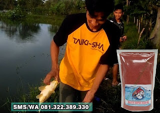 Umpan Ikan Mas Tombro Khusus Di Empang