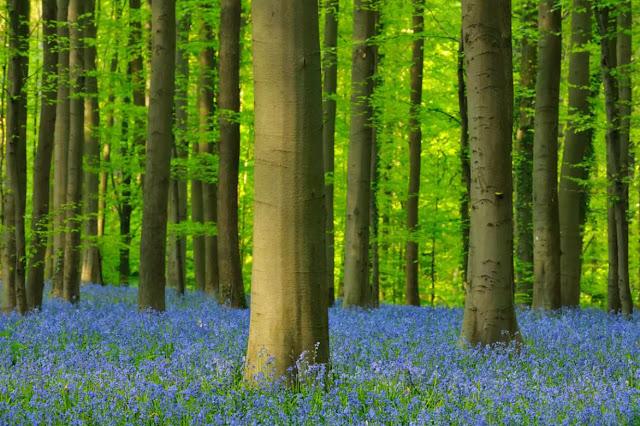 Bioma hutan adalah