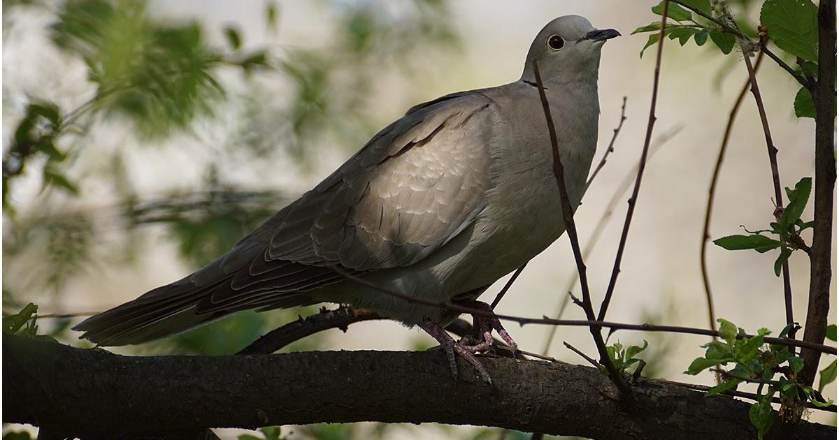 Птицы краснодара фото с названиями