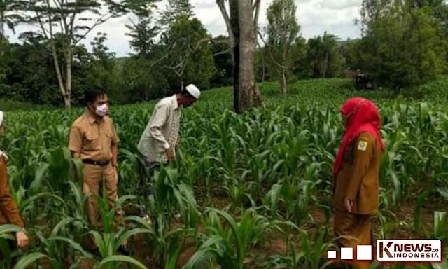 Selain Bibit Jagung, Manggis Hingga Bawang Merah Akan Hiasi Pertanian di Beberapa Kecamatan, Sinjai Barat Dapat Ujicoba Bawan Putih