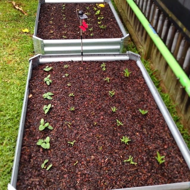 Raised Garden Bed Veggie Patch