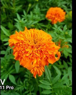 Vivo V11 Pro Camera Samples