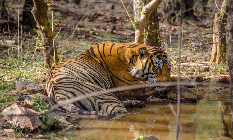mukundra hills tiger reserve