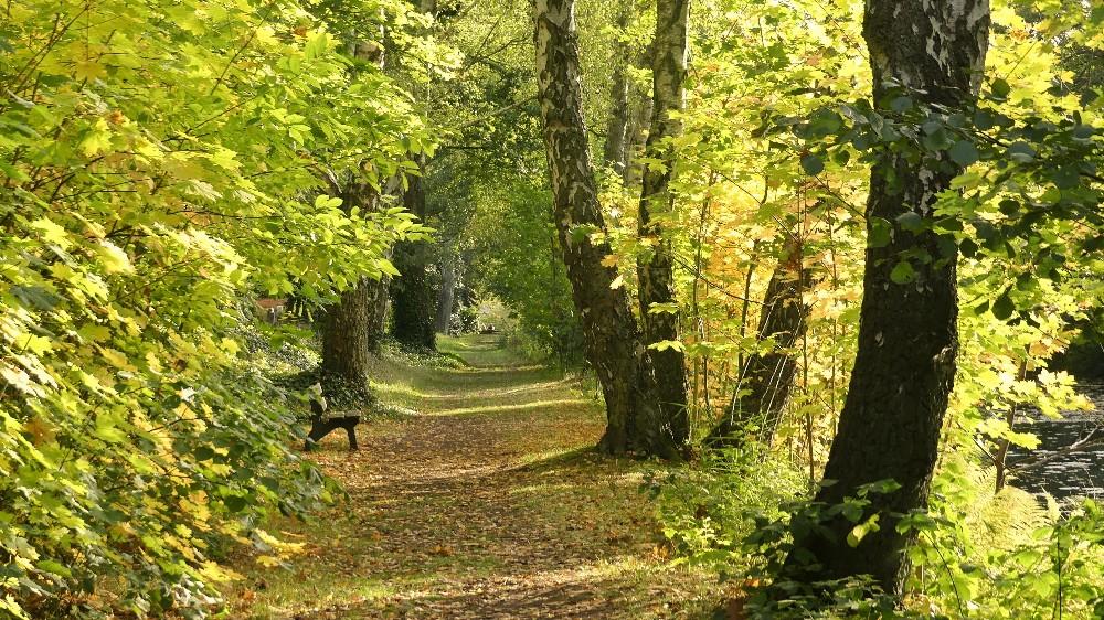 Herbstspaziergang,  Blattfärbung