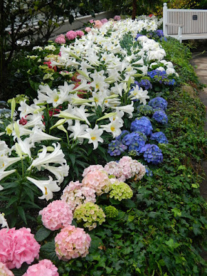 Massed Florist Hydrangeas and Easter Lilies at the Centennial Park Conservatory 2018 Easter Flower Show by garden muses-not another Toronto gardening blog