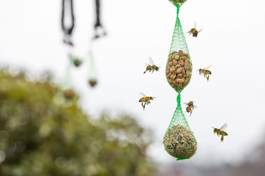 Bevorzugt Der Postillon: 8 Maßnahmen, mit denen jeder zur Rettung der Bienen NB98