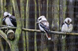 Lachender Hans Hunsrück Wildpark Rheinböllen