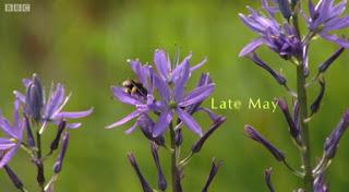 Late May