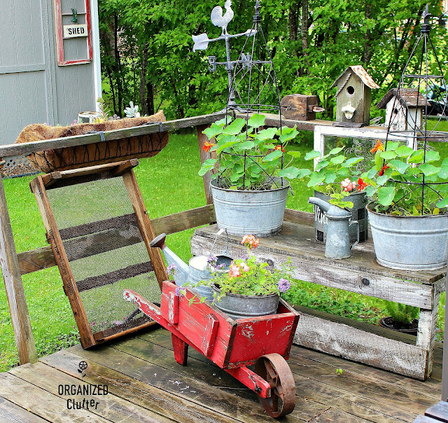 2019 Junk Garden Deck Plantings #vintage #galvanized #nasturiums #containergarden #outdoordecor #junkgarden #tulipcrate #wheelbarrow #obelisk #flowergarden