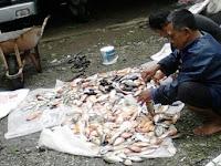 Ribuan Ikan di Telaga Ngebel Mati, Fenomena Tahunan yang Selalu Berulang, Penyebabnya. . .