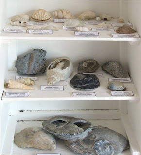 Fossil hunting in New Zealand