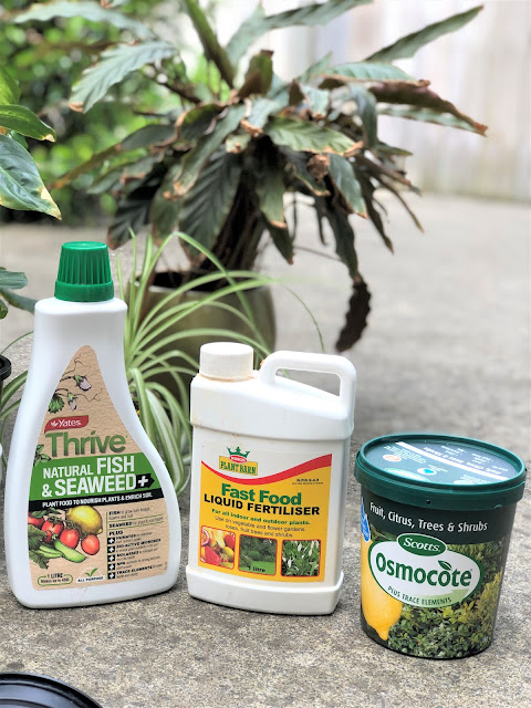 best fertiliser for indoor plants
