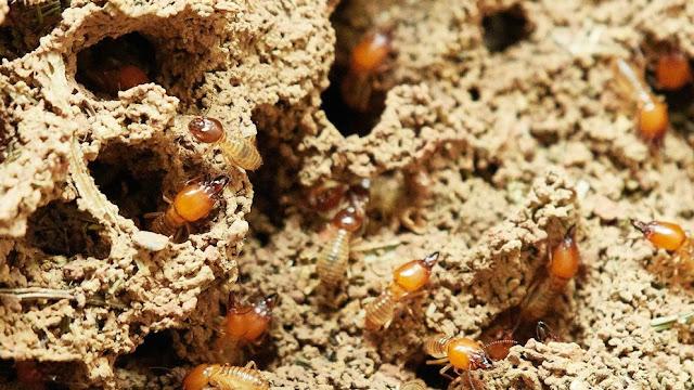 tratamientos termitas muebles