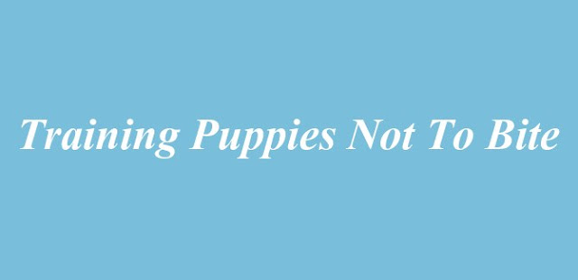 Training Puppies Not to Bite