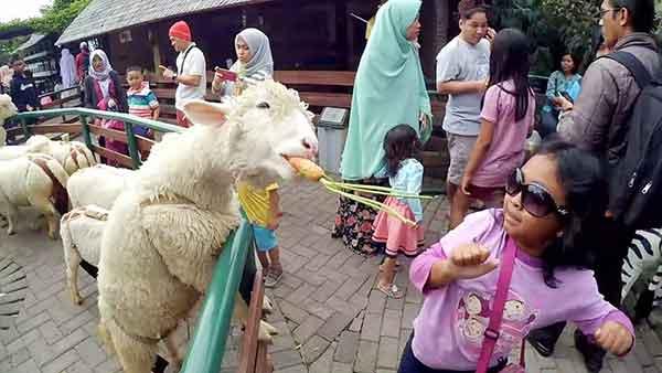 Tempat Wisata yang Cocok Untuk Bayi di Bandung