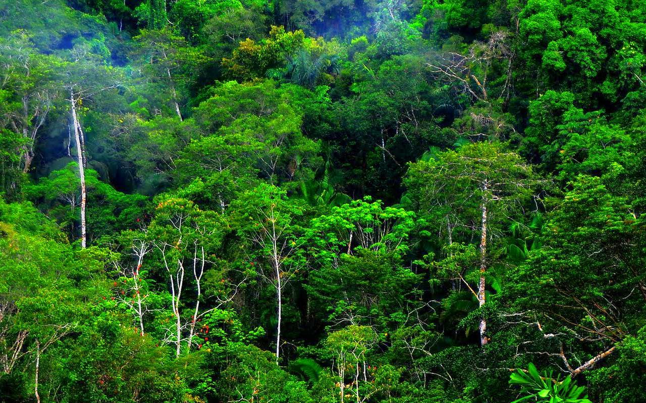 Persebaran Flora dan Fauna Di Indonesia  Ilmu Pengetahuan