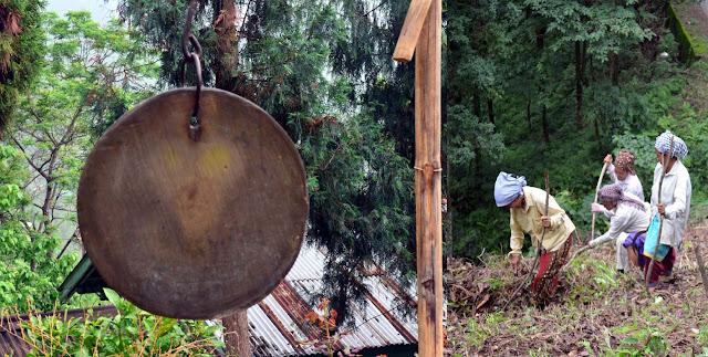 Cinchona plantation bell