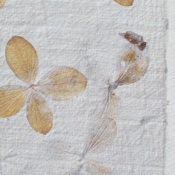 embedded flower petals in a sheet of handmade paper