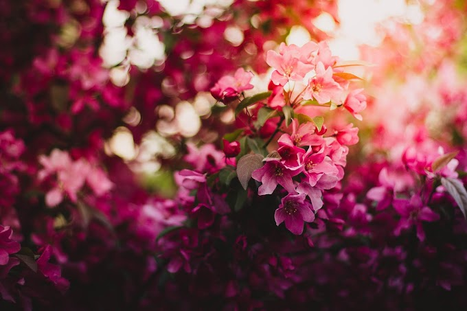 Blossom Floral Wallpapers