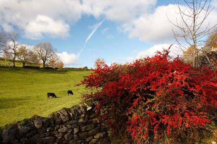 sonbaharda yayla manzaralı resimler