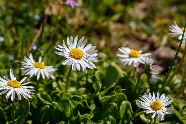 Spring Blossom 6