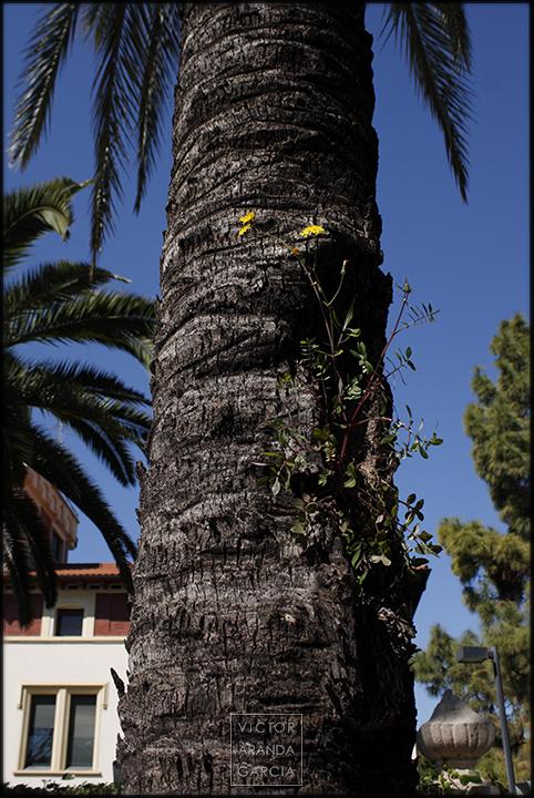 Fotografía de una planta silvestre creciendo en el tronco de una palmera