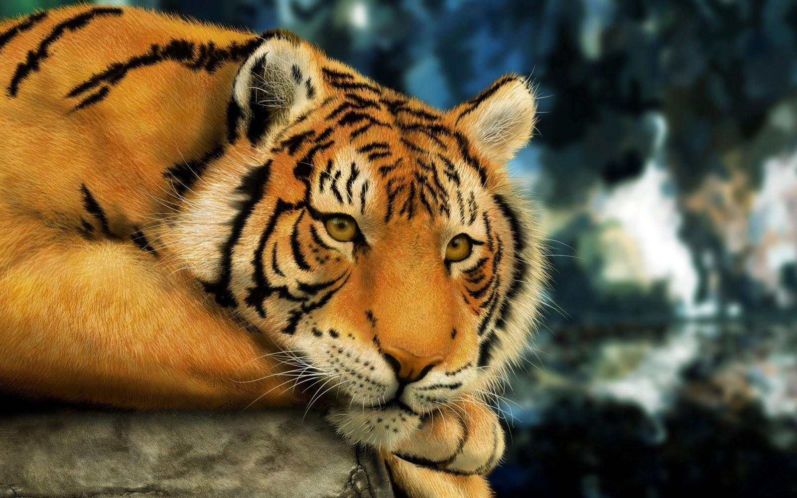 Fondos De Animales Animados: Descarga Fondos HD: Fondo De Pantalla