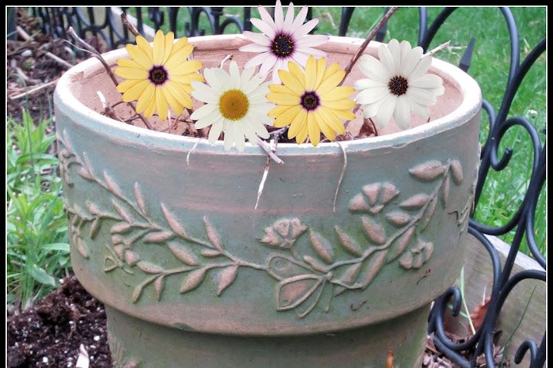Repurposed Bird Bath Garden Planter