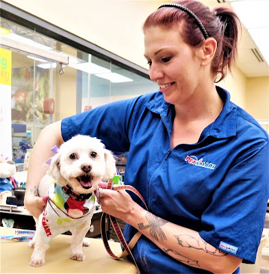 My dog posing in a PetSmart grooming campaign