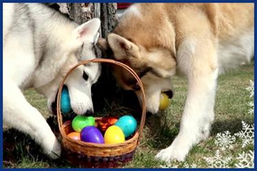 Hunde auf Ostereiersuche