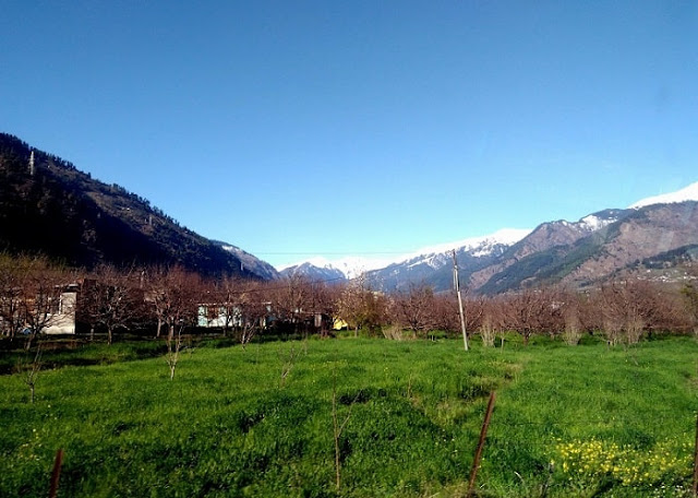 Palampur, Best Places to visit in Himachal Pradesh