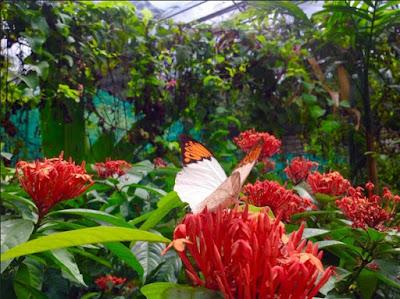 Wisata taman kupu-kupu di malaysia