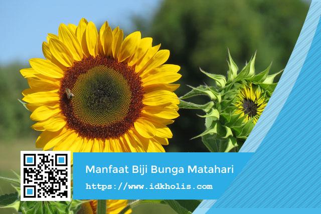 5 Manfaat Biji Bunga Matahari Untuk Kesehatan