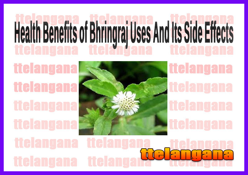 Health Benefits of Bhringraj Uses And Its Side Effects