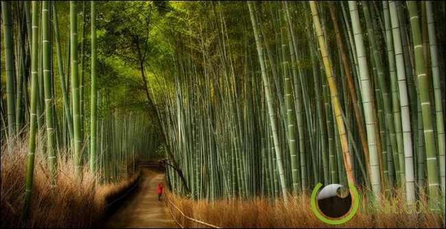 Jalan Bambu, Jepang