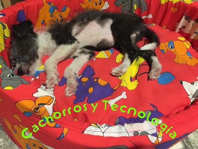 Gala salvar un perro envenenamiento Cachorros y tecnologia shurkonrad