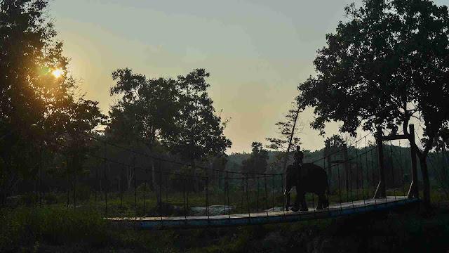 Melihat Aktivitas Gajah di Pusat Latihan Gajah (PLG) Minas