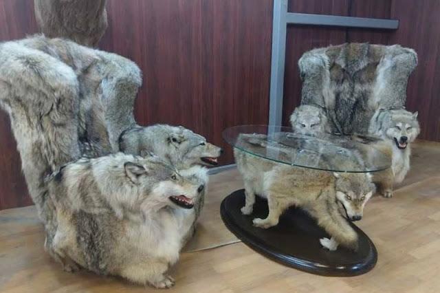 «Волчья» мебель из мебельного магазина Дагестана шокировала жителей соцсетей