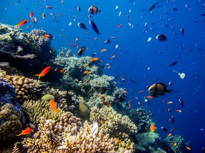 Nama-Nama Ikan Laut Lengkap Dengan Gambar