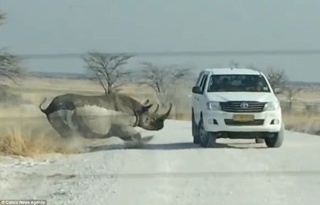 rhino attack tourists namibia