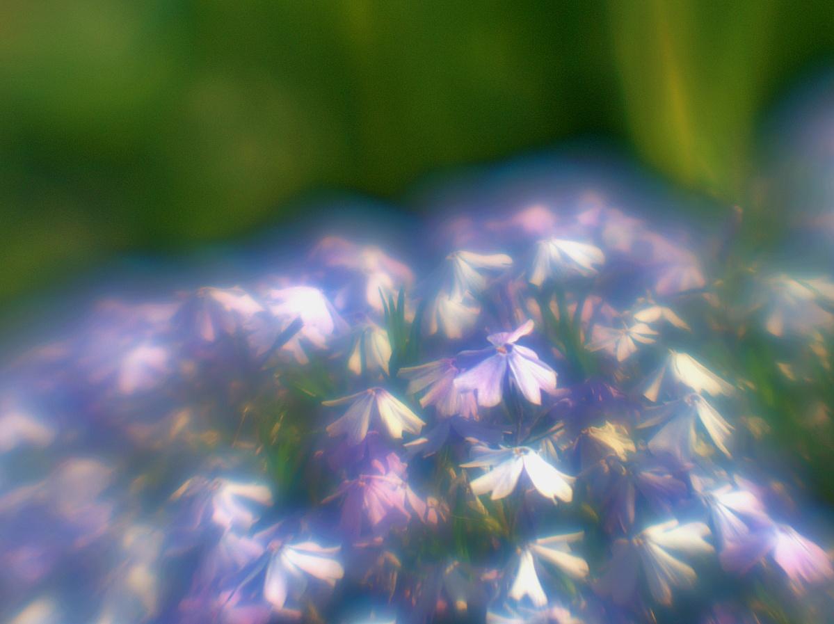 Blumen mit Aura