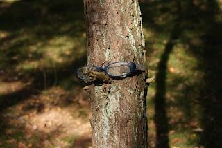Auf einen abgebrochenen Ast wurde eine Brille gesetzt, die vermutlich jemand verloren hat.