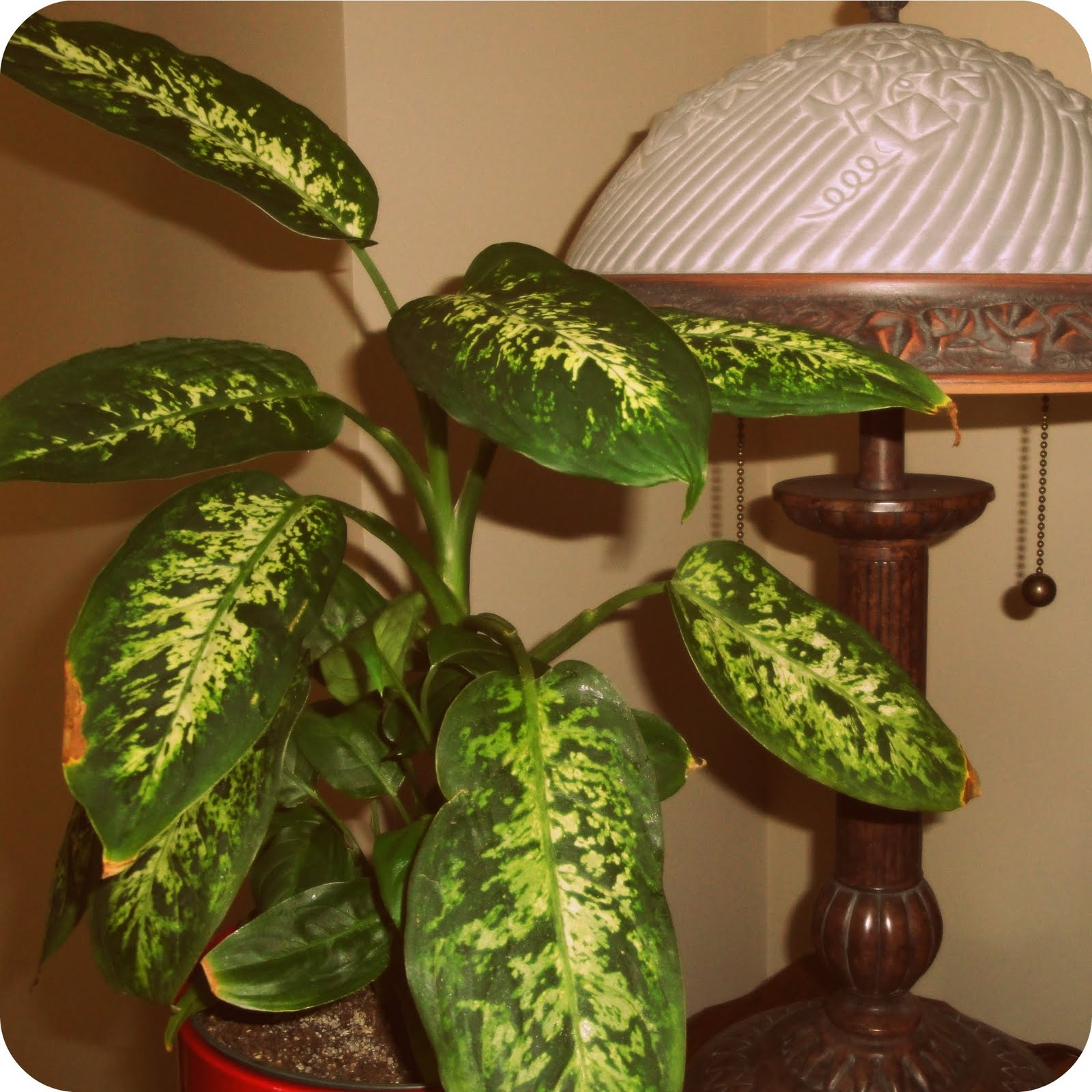 That Don T Require Sunlight 100 Indoor Plants That Don T