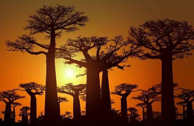 Best 10 Reasons to Explore Madagascar, Malagasy, Madagascar floura, Madagascar Fauna, lemurs, Antananarivo, Madagascar food