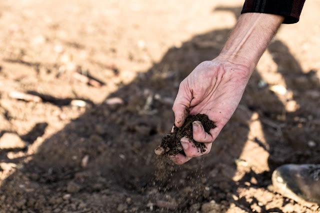 Make Bonsai Soil Without Money