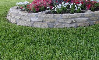 Palmetto st augustine grass Seed, Problems, Reviews, Maintenance